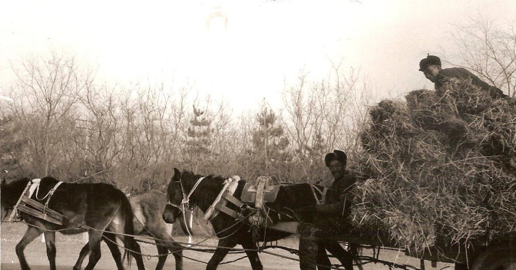 Traffic on road to Ming Tombs in 1975.  Today it would be Ferraris and Bentleys!